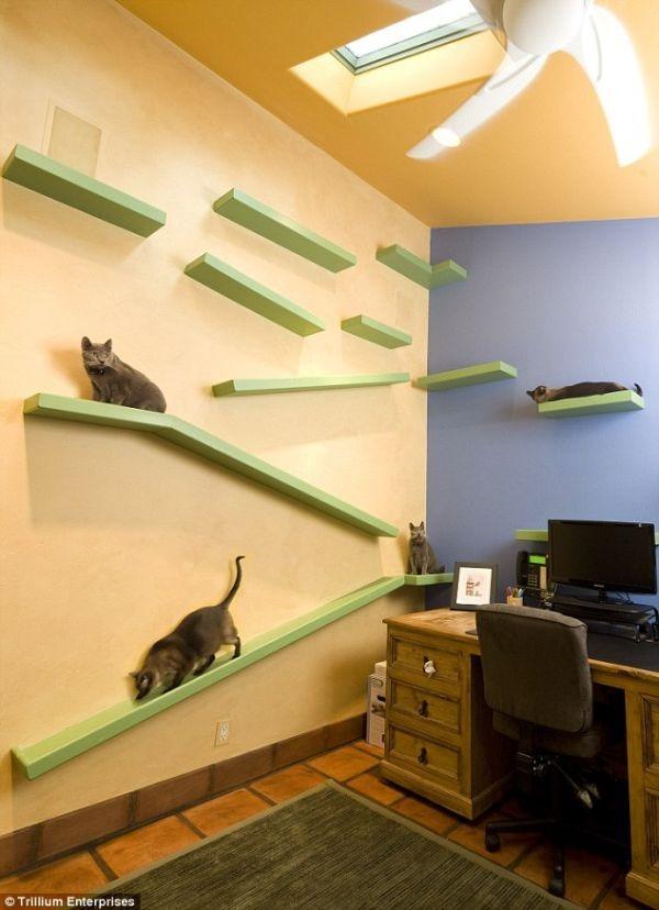 猫好きにはたまらない!猫と暮らす楽園-Cat Paradise House