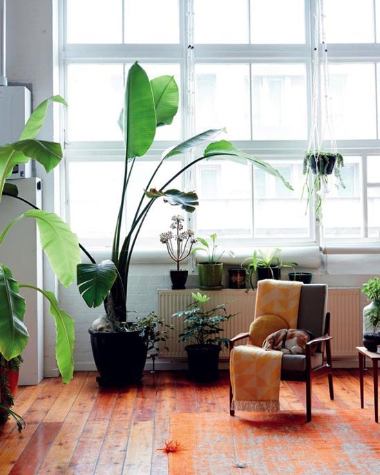 心安らぐ〜。植物と暮らす癒しの部屋まとめ